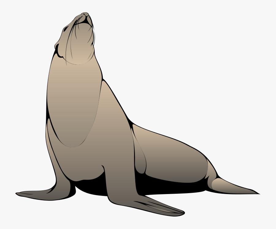 Free Pictures Download Clip - Seals Clip Art, Transparent Clipart