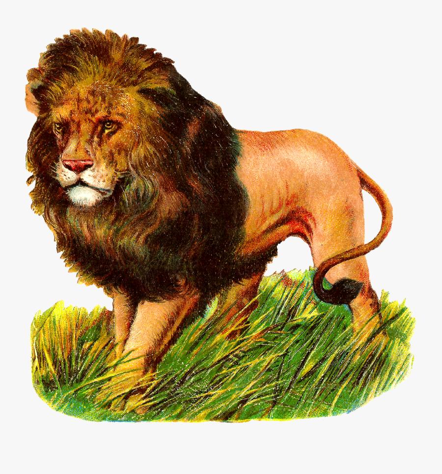 Lions Clipart Zoo Animal - Lion Vintage Animal Transparent, Transparent Clipart