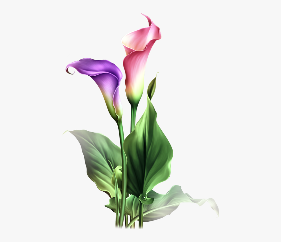 Find This Pin And More On Dibujos Flores By Adenuez - Calla Lily Flower Png, Transparent Clipart