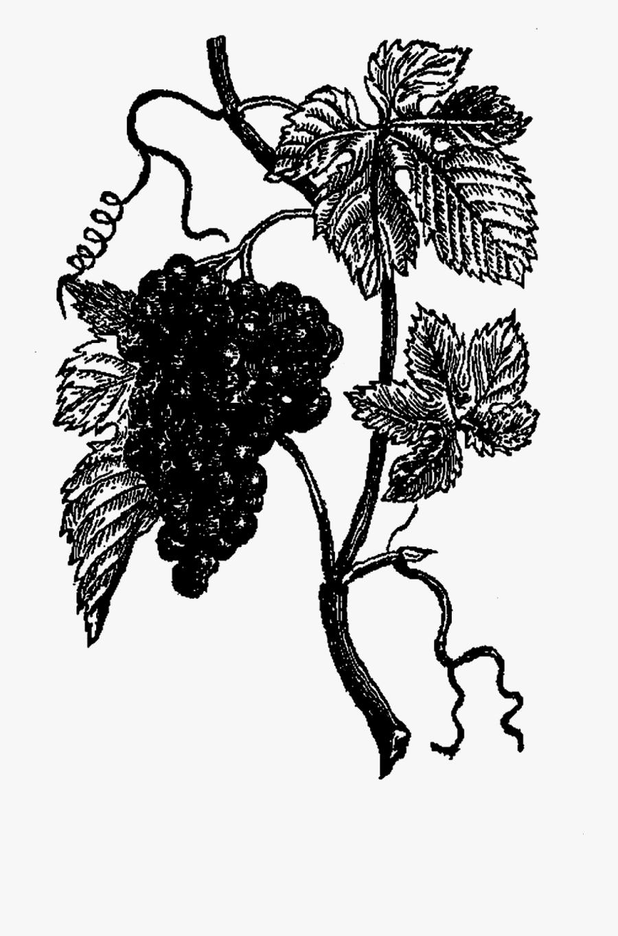 Grape, Transparent Clipart