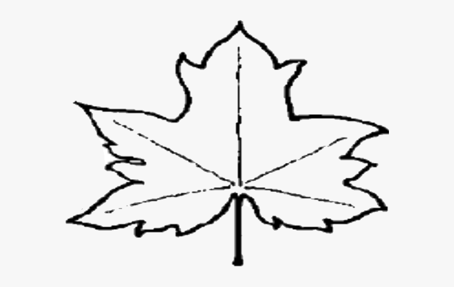 Leaf Outline Pictures Clipart Free To Use Clip Art - Outline Images Of Leaf, Transparent Clipart
