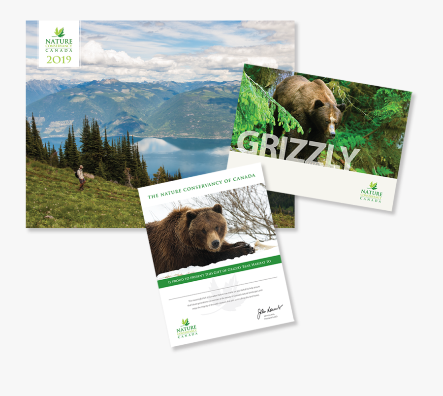 Grizzly Bear Png - Grizzly Bear, Transparent Clipart
