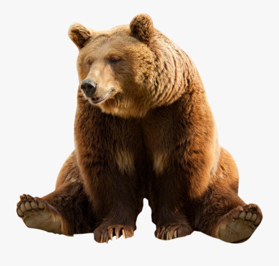 Bear Clipart Transparent Background - Bear Transparent Background, Transparent Clipart