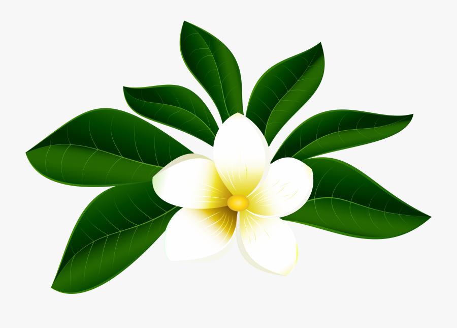 Transparent Hawaiian Flower Clipart - Tropical Flower Clipart Png, Transparent Clipart