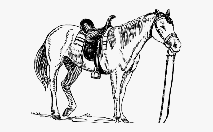 Quarter Horse Cliparts - Horse And Dog Coloring Pages ...