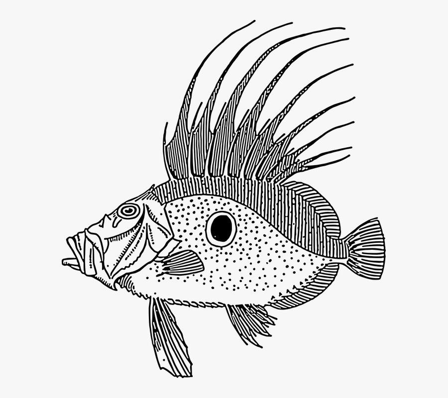Large, Fish, Swimming, Scales, Spike, Spot, Species - John Dory Fish Vector, Transparent Clipart