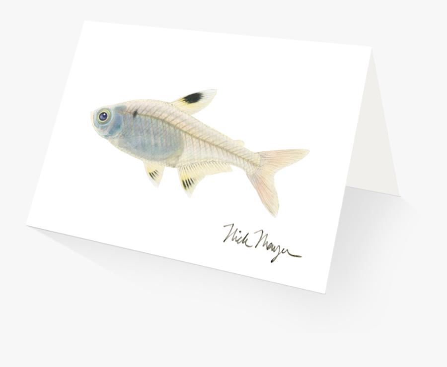 Xray Clipart Fish - Green Bass, Transparent Clipart