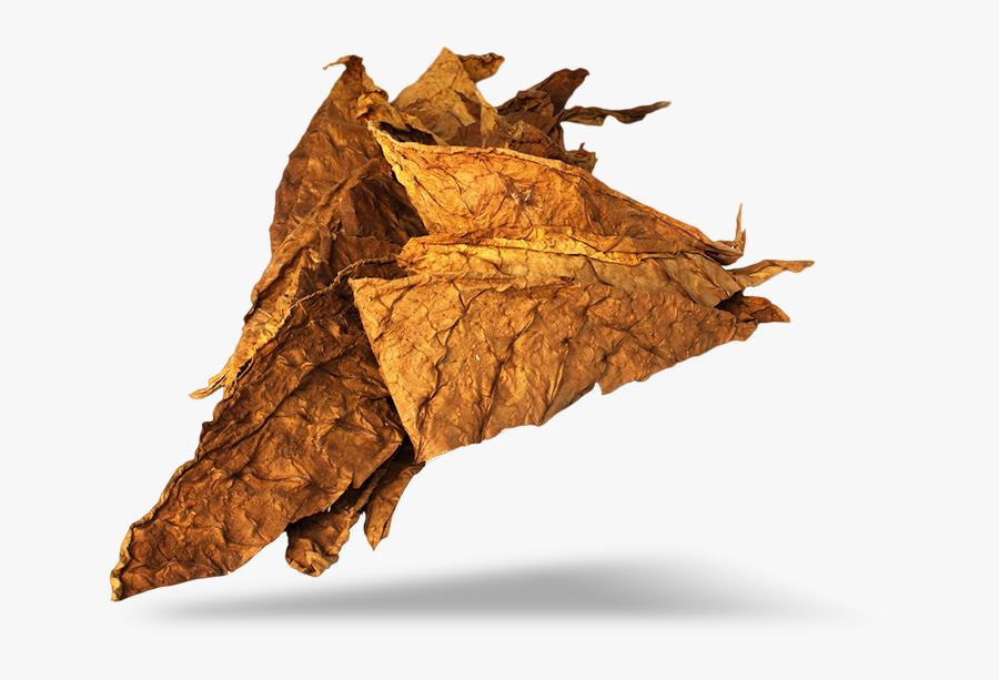 Transparent Tobacco Plant Clipart - Transparent Tobacco Leaf Png, Transparent Clipart