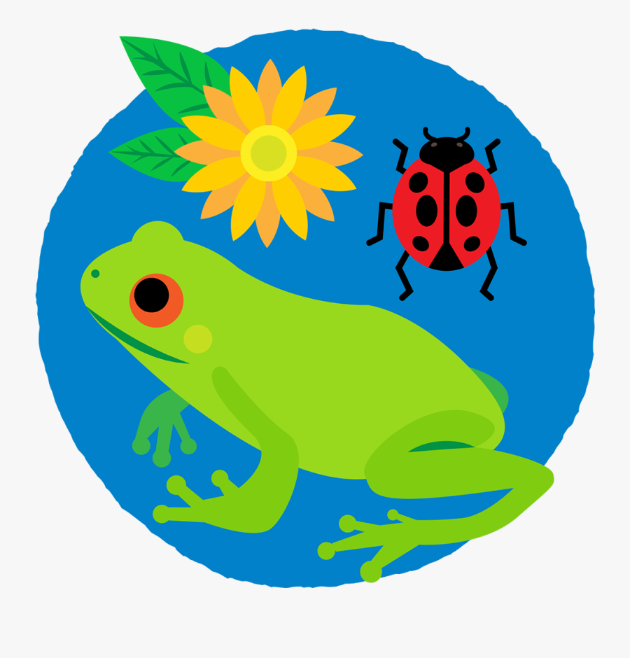 Frog, Ladybug And Flower In A Circle - Biodiversity Images To Draw, Transparent Clipart
