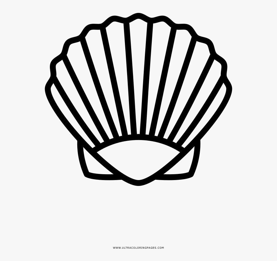 Shell Coloring Page Sea Shells Clipart Black And White Free Transparent Clipart Clipartkey