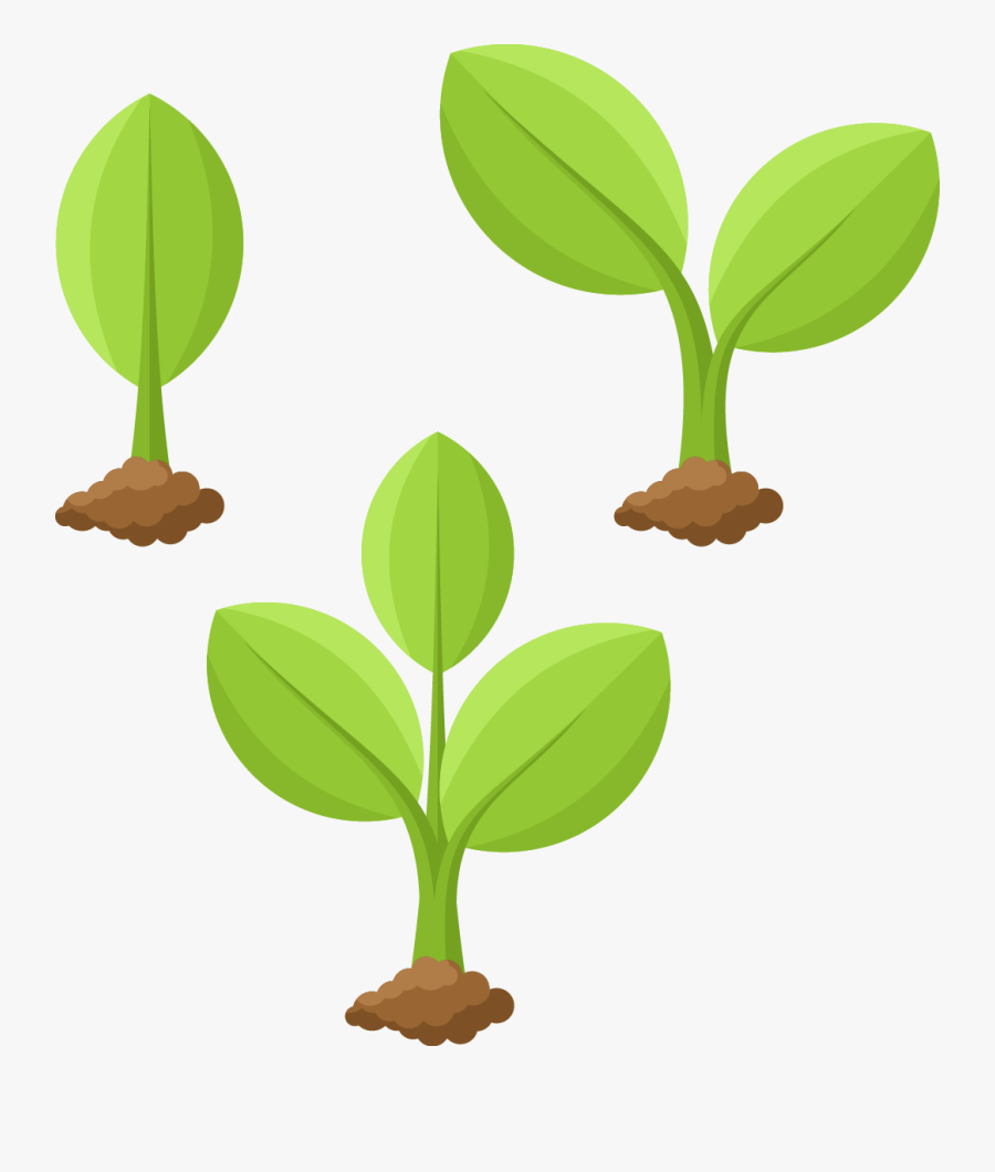 Transparent Plant Growing Png - Plant Cartoon Drawing, Transparent Clipart