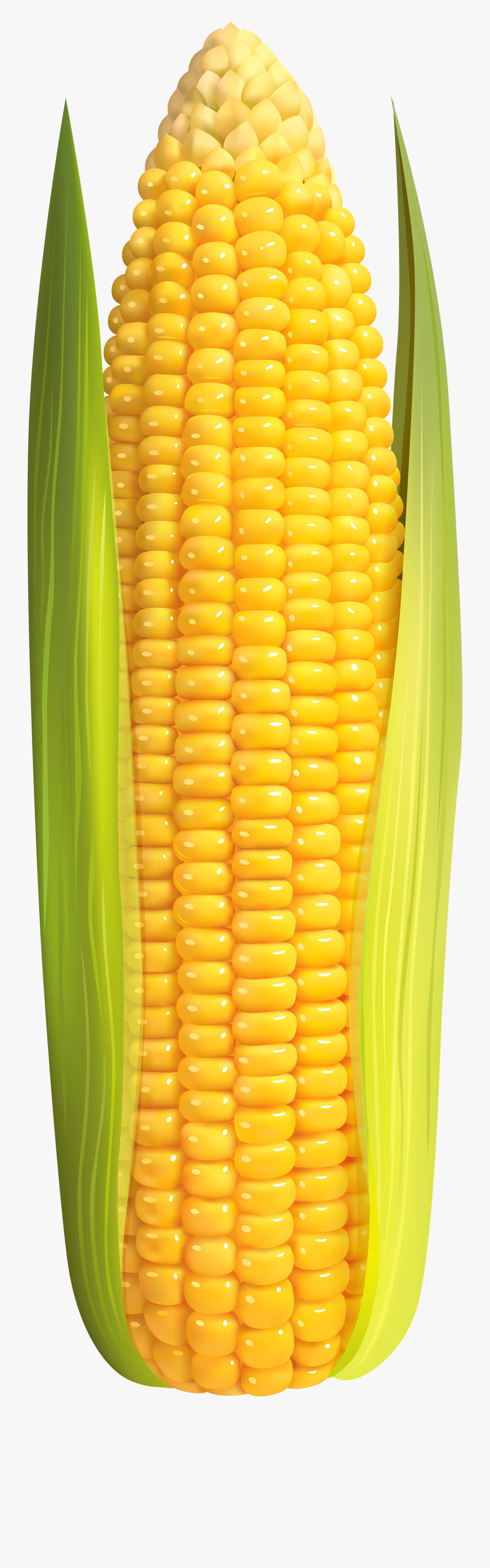 Clip Art Image Gallery Transparent Background - Corn On The Cob Png, Transparent Clipart