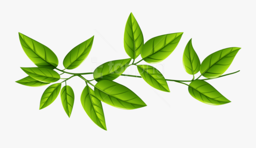 Free Png Download Leaves Free Download Png Png Images - Green Leaves Transparent Background, Transparent Clipart