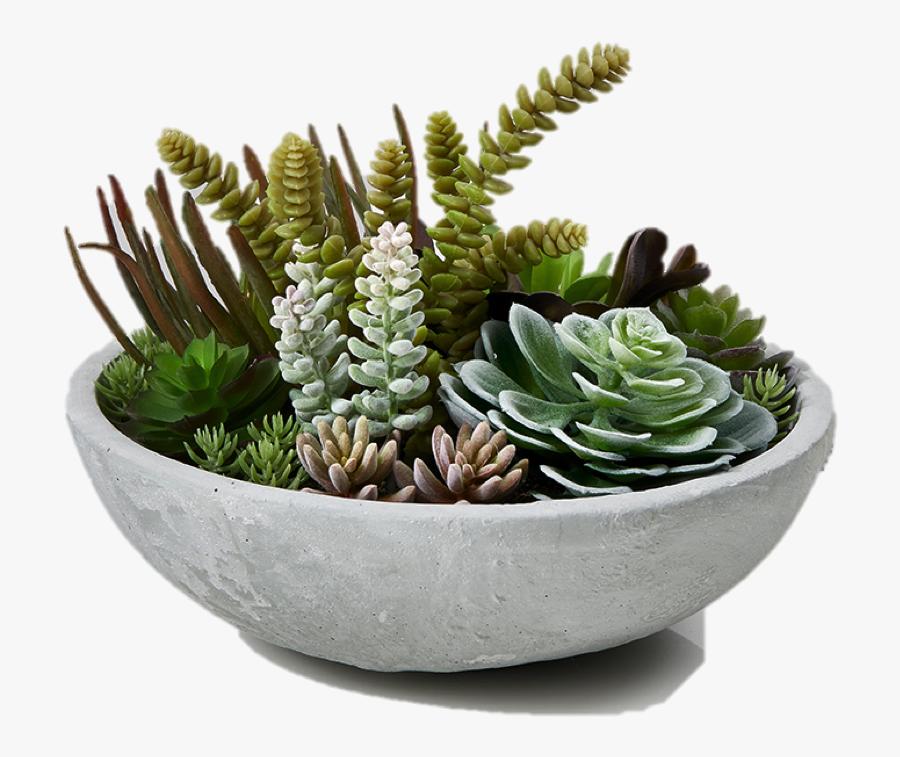 Succulent Plant Garden Plants Succulent Bowl Flowerpot - Succulent Plants Transparent Background, Transparent Clipart