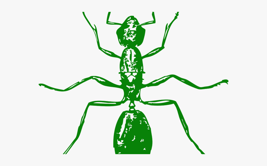 Ant Body Black And White, Transparent Clipart