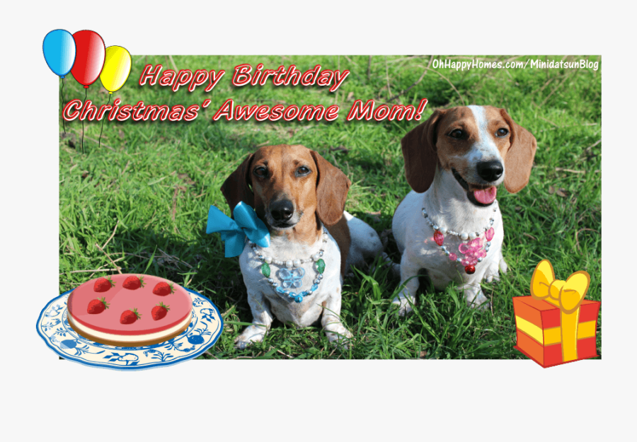 Paw Province Wishes My - Happy Birthday From The Two Of Us, Transparent Clipart