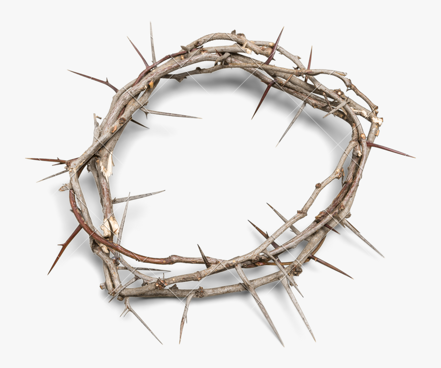 Of Thorns Photos By - Transparent Crown Of Thorns Png, Transparent Clipart