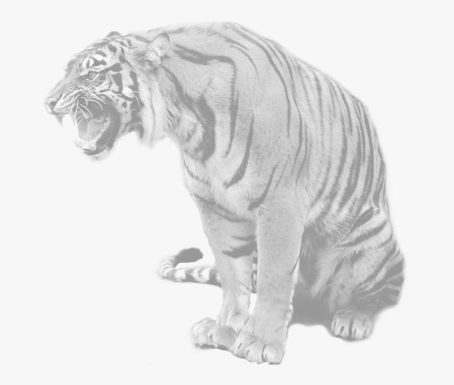 Transparent Tony The Tiger Png - Blue Maltese Tiger Real, Transparent Clipart