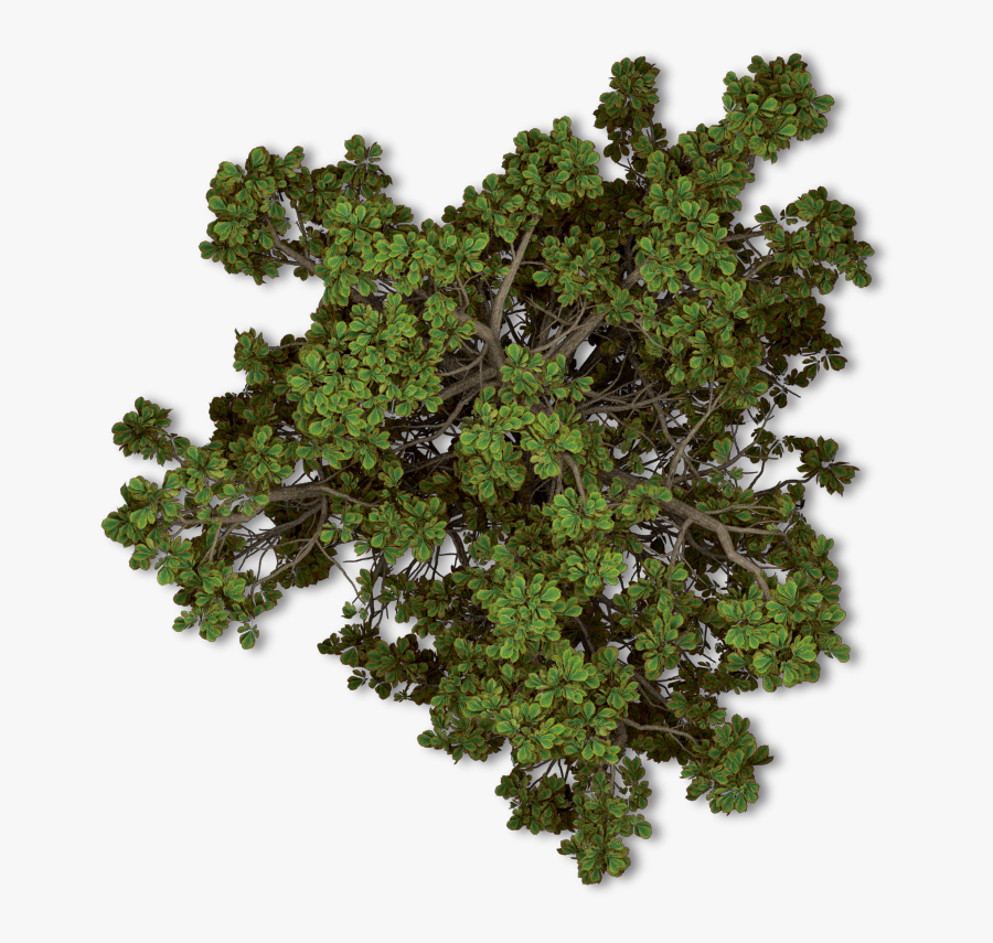 Hd Trees Nature Topview - Tree Top View Png, Transparent Clipart