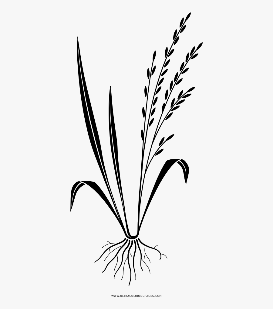 Rice Coloring Page - Illustration, Transparent Clipart