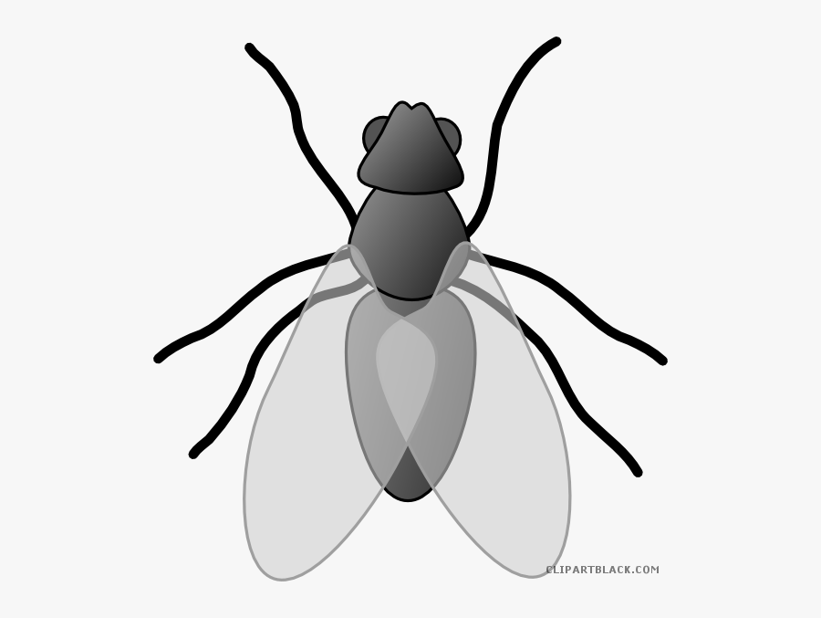 Insect Bug Animal Free Black White Clipart Images Clipartblack - Fly Clip Art, Transparent Clipart