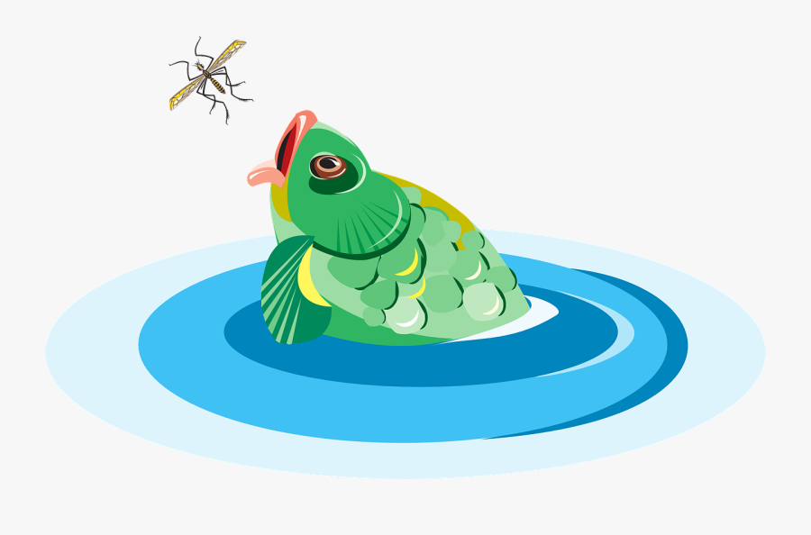 Fish, Bug, Water, Reaching, Eating - Cartoon Fish Eating An Insect, Transparent Clipart