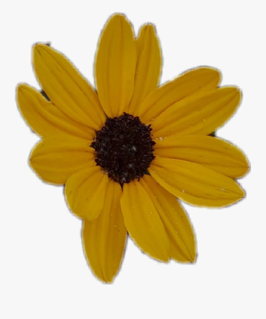 Transparent Sunflower Clipart Aesthetic Anime Sunflower Png Free Transparent Clipart Clipartkey