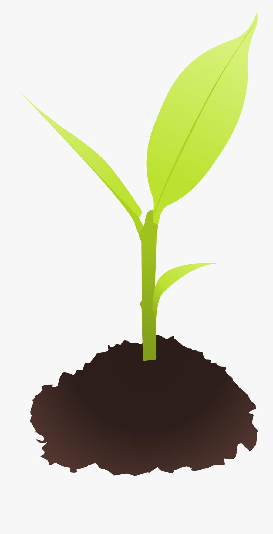 Clip Art Royalty Free Download Plant - Small Plant Clip Art, Transparent Clipart