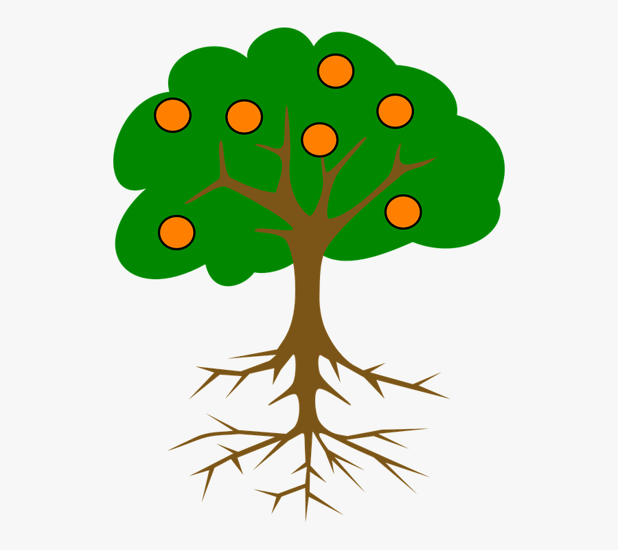 Collection Of Cartoon Orange Tree - Parts Of The Tree Clip Art, Transparent Clipart