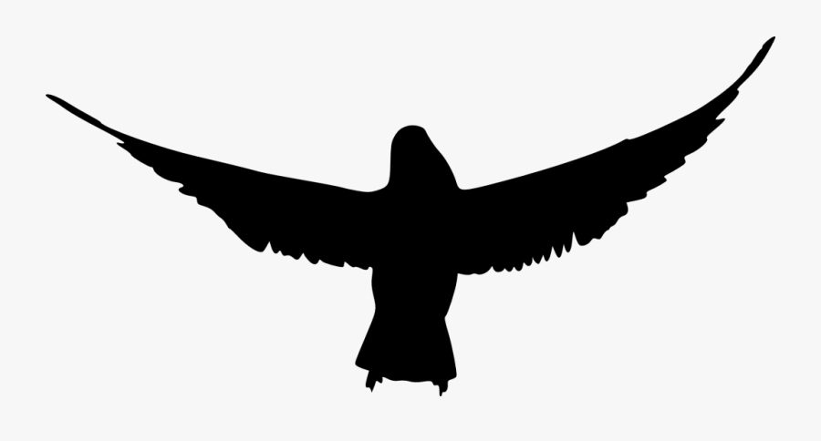 Bird Silhouette Beak Clip Art - Bird Silhouette Transparent Background, Transparent Clipart