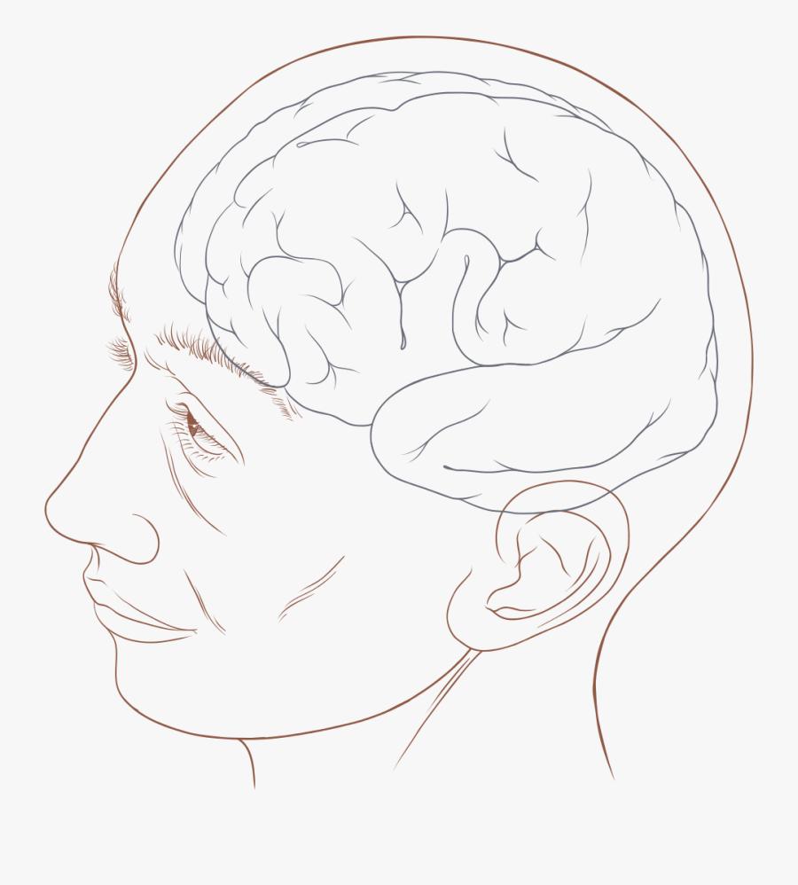 Human Head Png - Human Head Diagram, Transparent Clipart