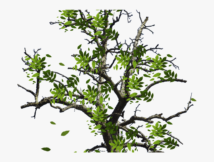 Transparent Branching Tree Clipart - Tree With Leaves Png, Transparent Clipart