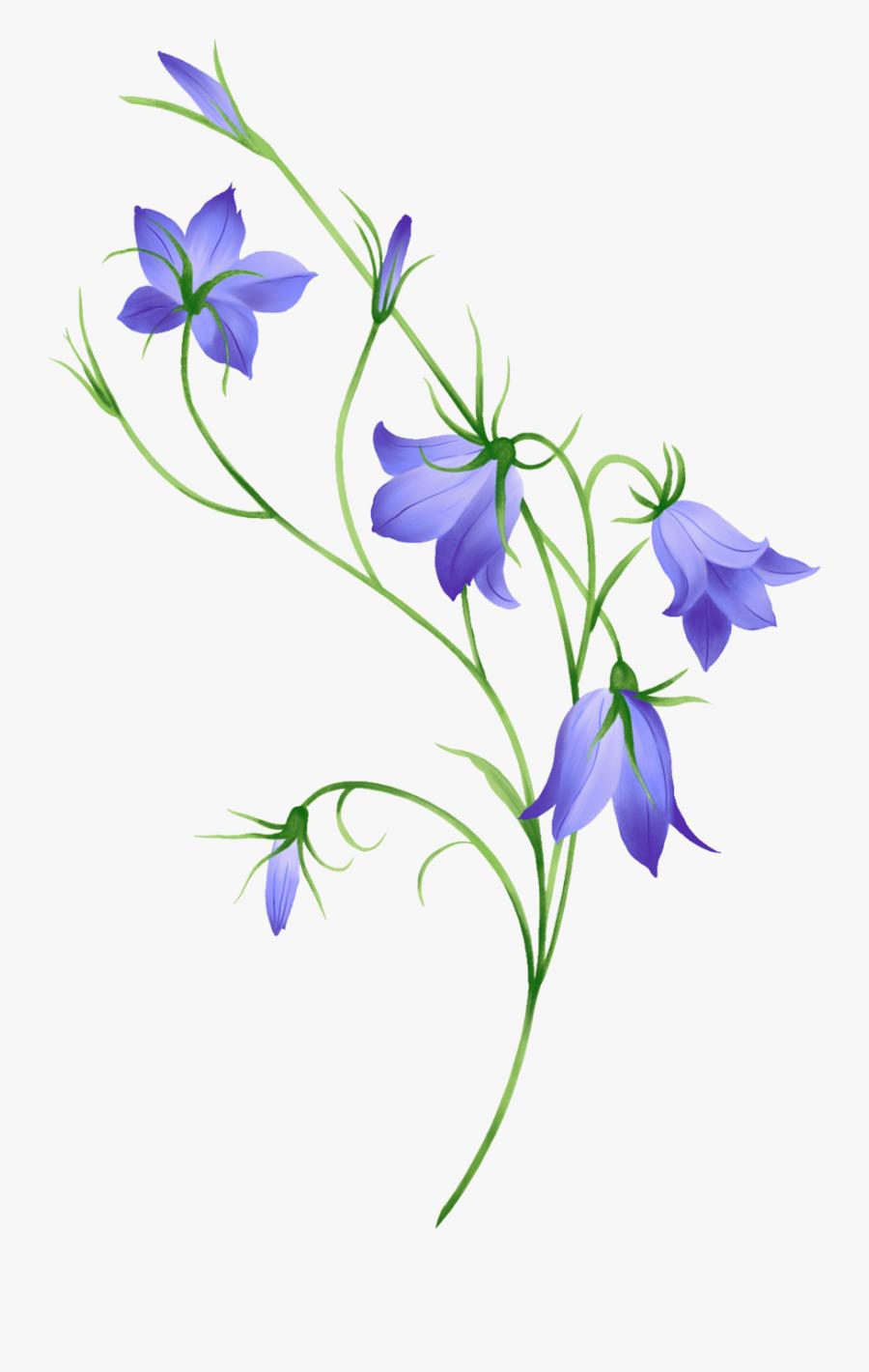 Morning Glory, Bellflower, Leaf, Nature - Flower Bell Design, Transparent Clipart