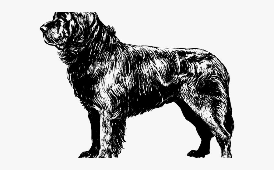 Newfoundland Dog Coloring Page, Transparent Clipart