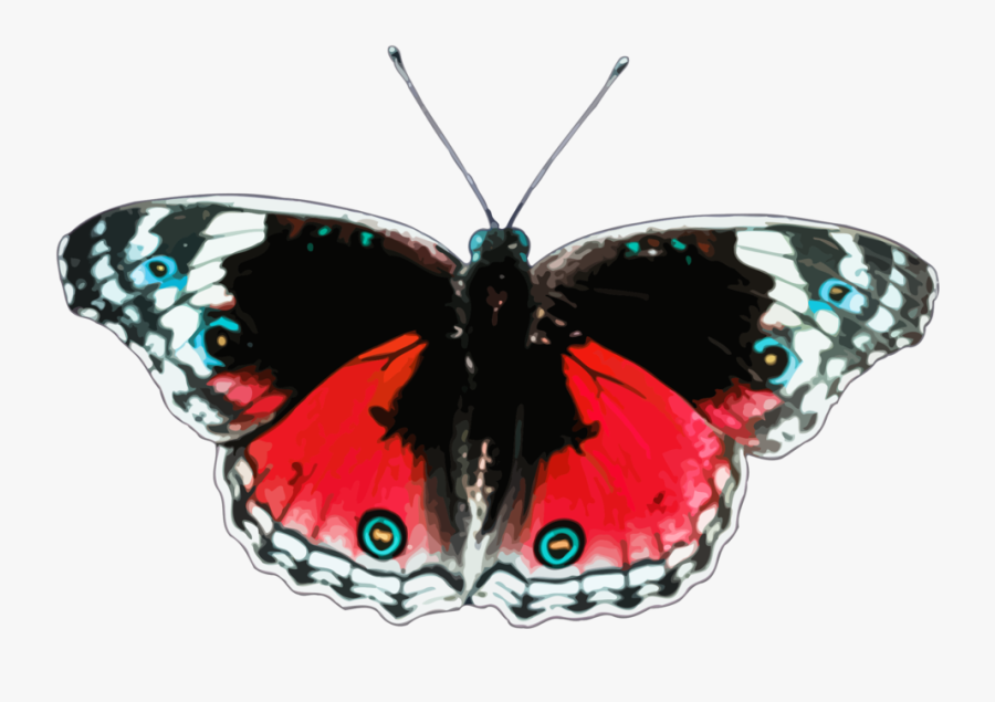 Butterfly,cynthia Subgenus,symmetry - Free Clipart Butterflies, Transparent Clipart