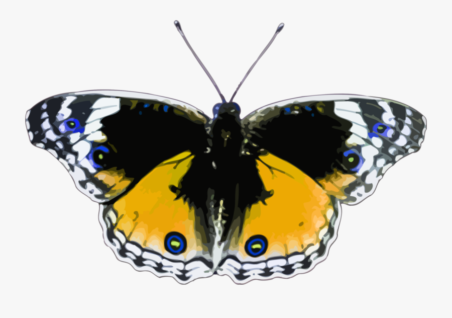 Butterfly,cynthia Subgenus,symmetry - Butterfly, Transparent Clipart