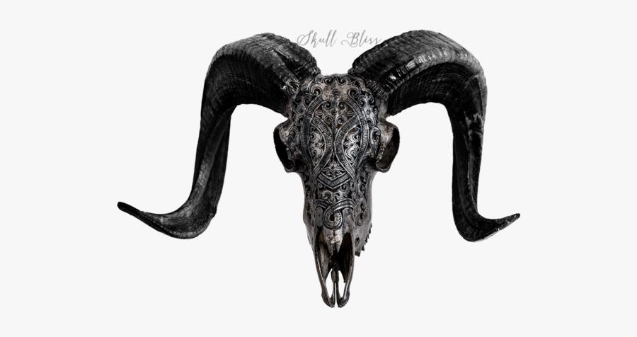 Carved Ram Skull - Horn, Transparent Clipart