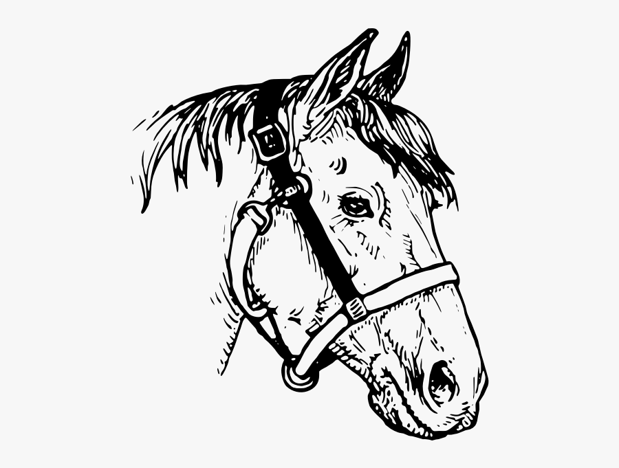 "Horse""s Head Image - Line Drawing Horses Head, Transparent Clipart"