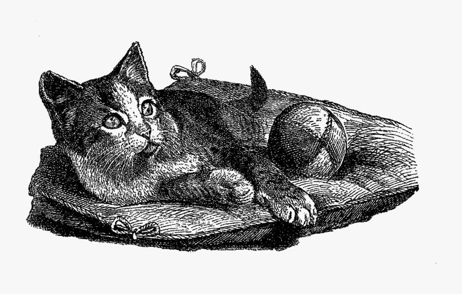 Cat Domestic Illustration Vintage - Domestic Short-haired Cat, Transparent Clipart