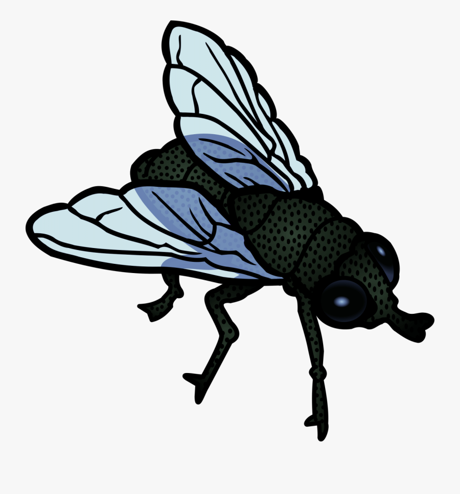 Fly - Flies Clipart, Transparent Clipart