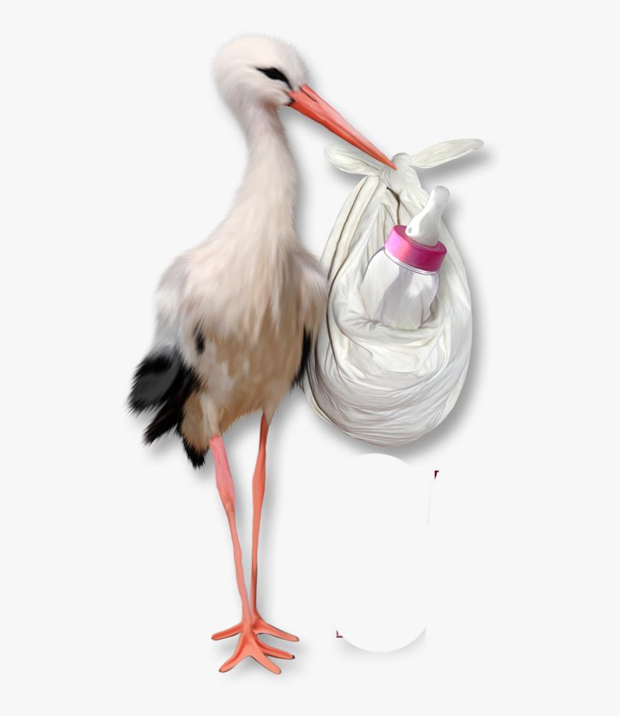 Marcos Para Fotos Baby Shower Gratis, Transparent Clipart