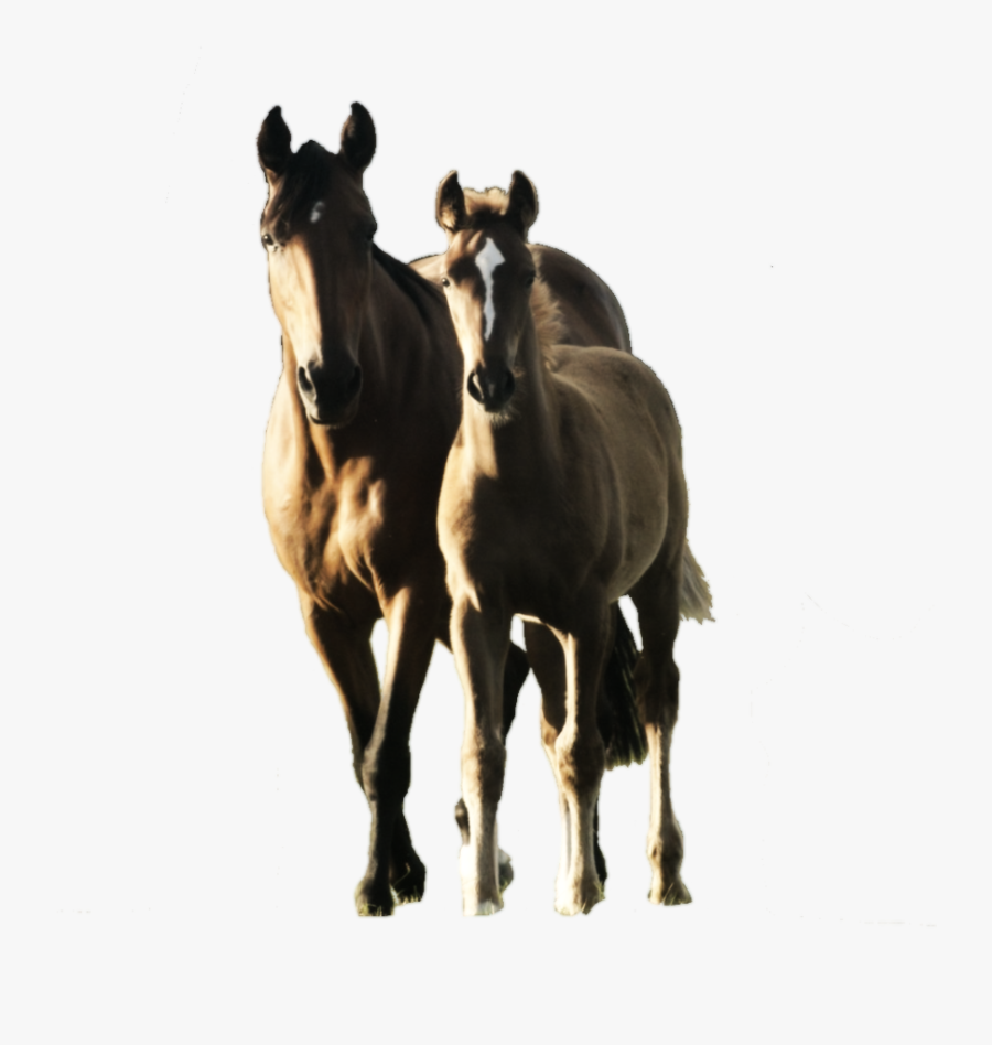 Mare And Foal Png, Transparent Clipart