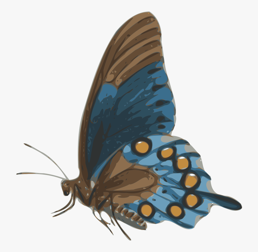 Butterfly - Butterfly Side View, Transparent Clipart