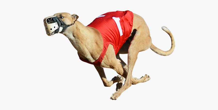 Derby Lane Greyhound Track Greyhound Racing Greyhound - Greyhound Png, Transparent Clipart