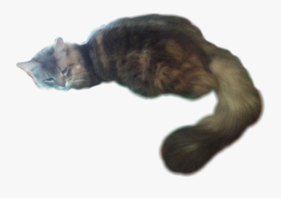 #my #cat #laying #down #kitty #big #tail #bigtail #fluffy - Cat Looking Down Png, Transparent Clipart
