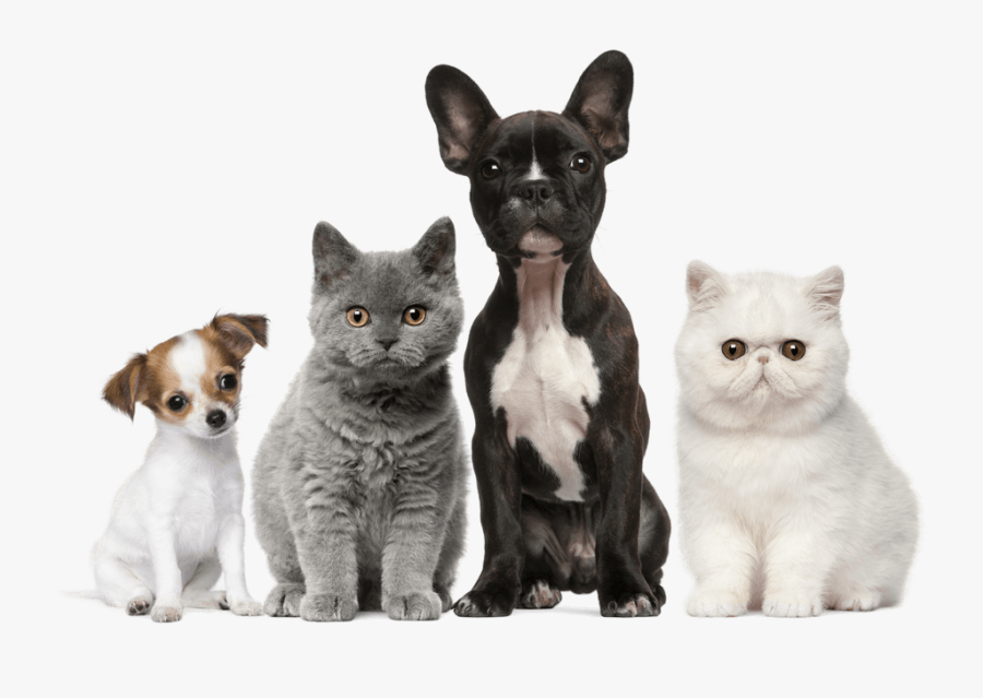 Dog Cat Puppy Kitten Pet - Many Dog And Cat, Transparent Clipart
