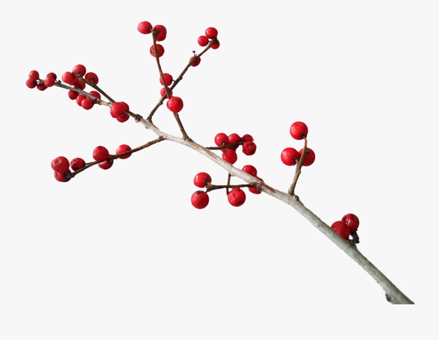 Christmas Berries Png, Transparent Clipart
