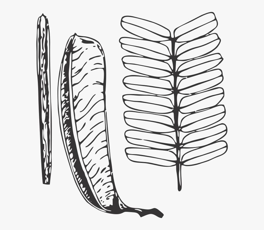 Zebrawood Leaf, Transparent Clipart