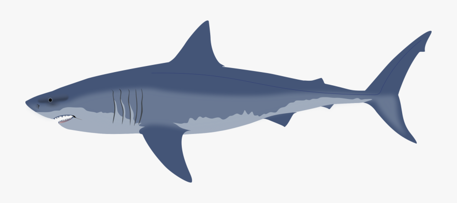 Shark Free Rear Tip, Transparent Clipart