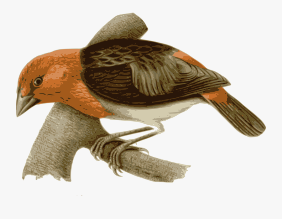 Water Bird,beak,wing - Bird With Brown And Orange Feathers, Transparent Clipart